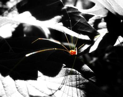 Lil_spider